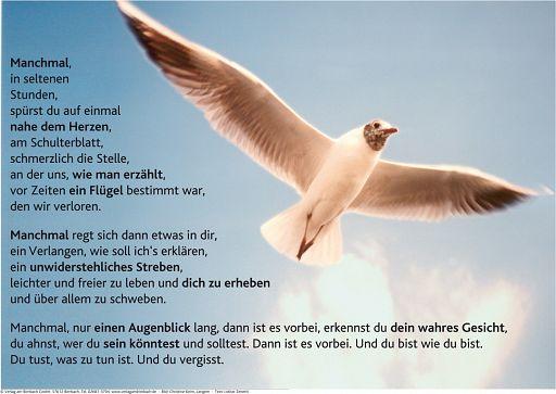 """Schaukastenposter 29 """"Flügel"""""""