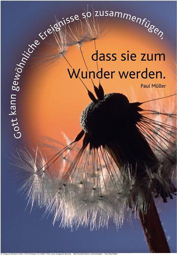 """Schaukastenposter 38 """"Pusteblume"""""""