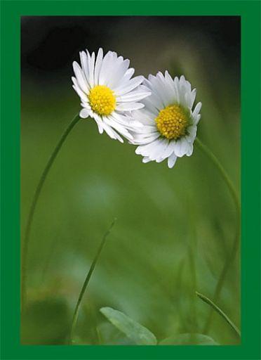 "Notizbuch, Tagebuch ""Blumen"""